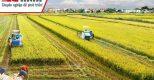 Ngành nông nghiệp đẩy mạnh hệ thống hóa thông tin quản lý tài chính kế toán